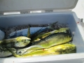 Caribsea fish 2_resize