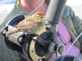 Nre Lattitude bird on reel_resize