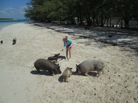 pigs-17_resize