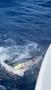 Big-Game-Sailfish-in-water1_resize