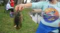 Deborah-Pack-Mayan-Cichlid-close-up-of-fish-no-face_resize