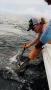 lady releaaes sailfish edit_resize